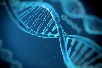 Human Gene Product Wound Healing