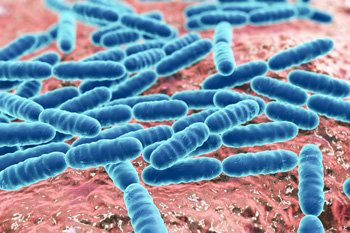 Lactic Acid Bacteria Play a Key Role in Accelerated Wound Healing